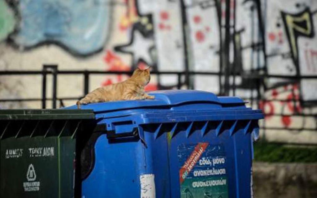 Ερευνα: Οι Ελληνες λένε «ναι» στην ανακύκλωση -Το 92% ανακυκλώνει  Πηγή: Ερευνα: Οι Ελληνες λένε «ναι» στην ανακύκλωση -Το 92% ανακυκλώνει | iefimerida.gr